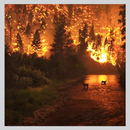Wild-fires as a result of climate change
